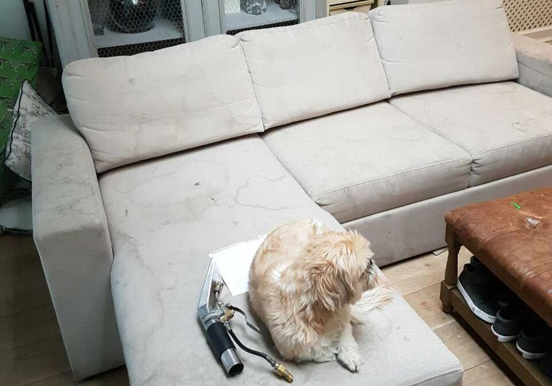 cleaning sofa Bayswater